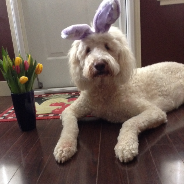 Happy Easter Doodle Family!