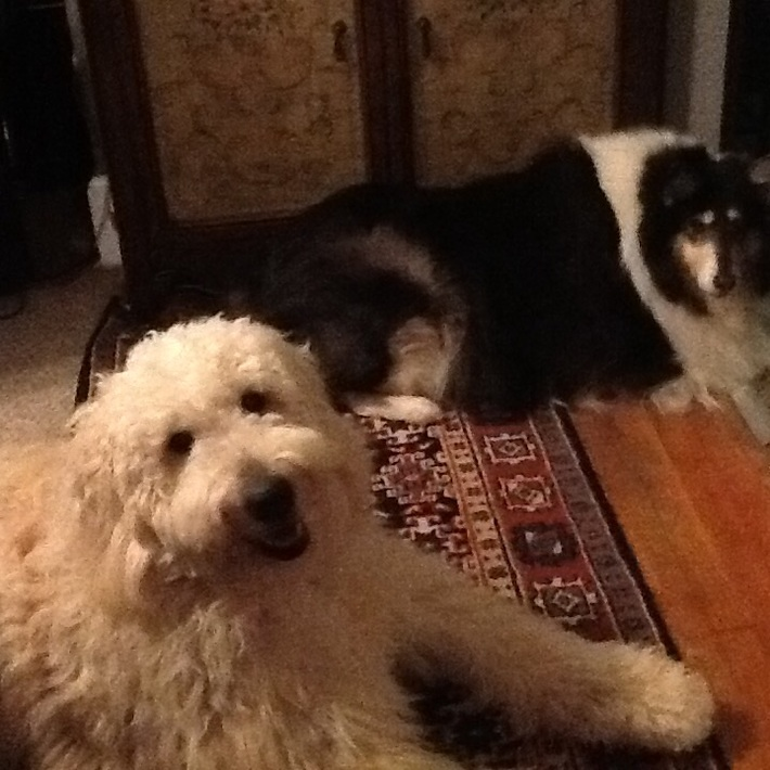 Lance and his collie sister Jamie.