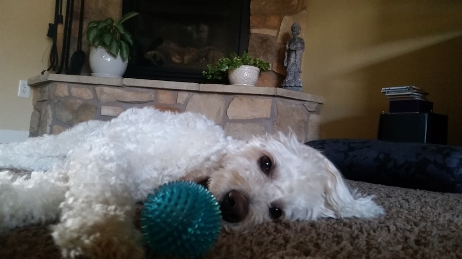 Just lazing around with my ball
