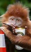 monkeybeer