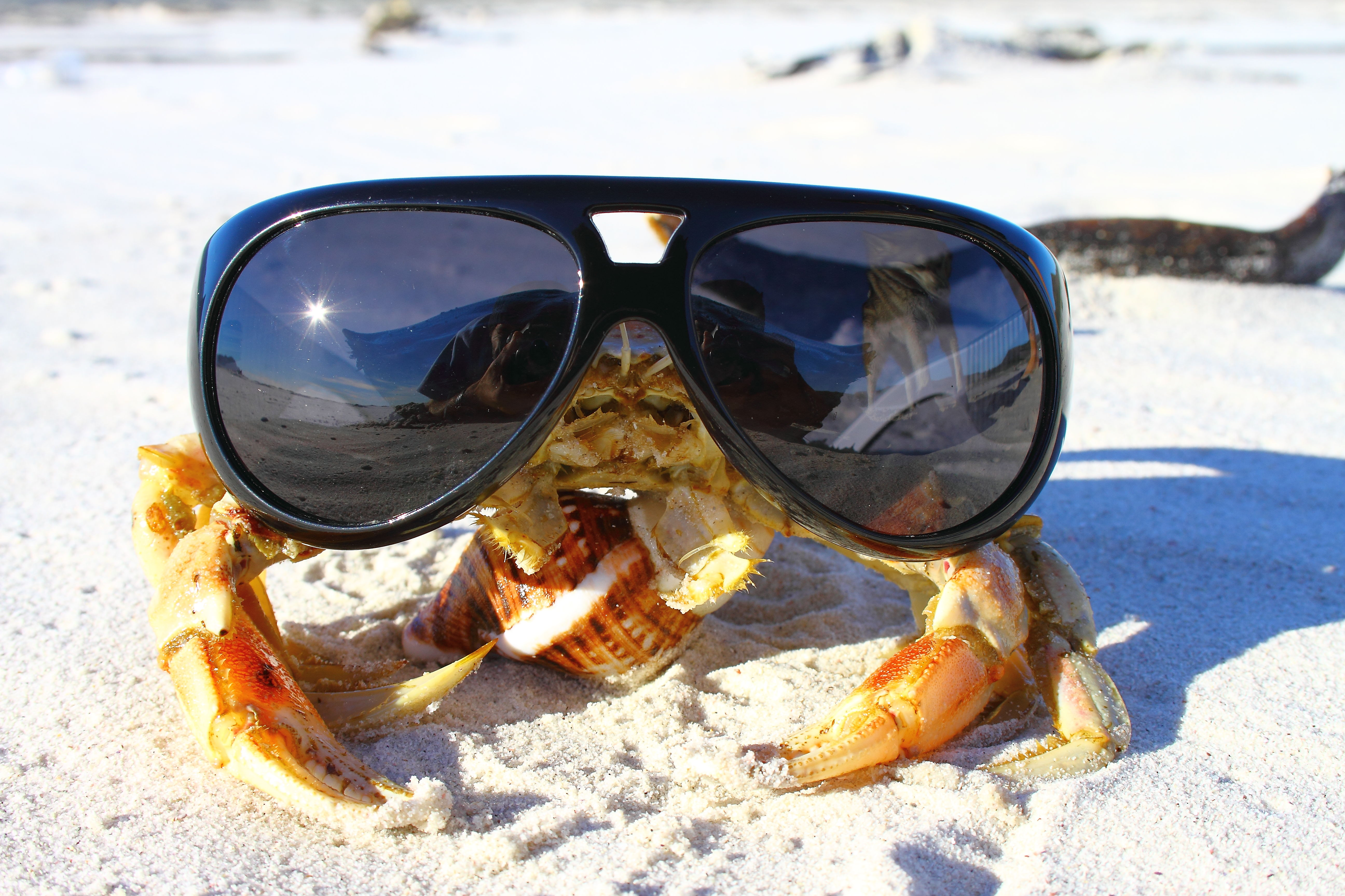 Crabbystyle