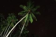 Celestial palms