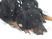Tupak dans la neige