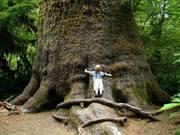 Entretien avec un arbre