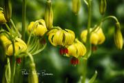 Fleurs dans le Conemara6
