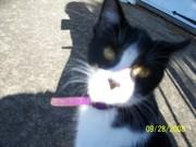 My Cat Oreo