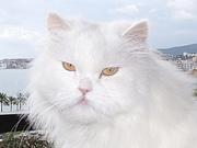 Fuyur, my cat