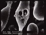 naughty microbe