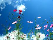 flowery blue