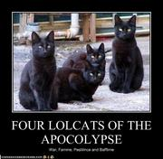 four-lolcats-of-the-apocalypse