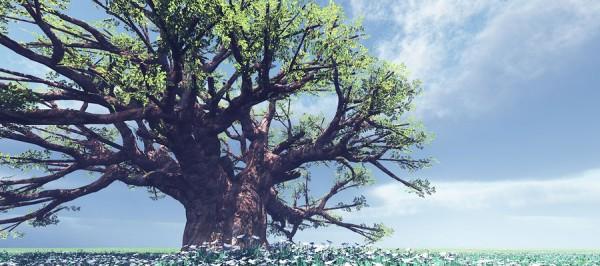 nature beautiful tree