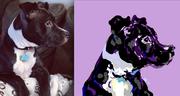 Alycia Gay's pup