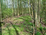 Trackbed near Towcester