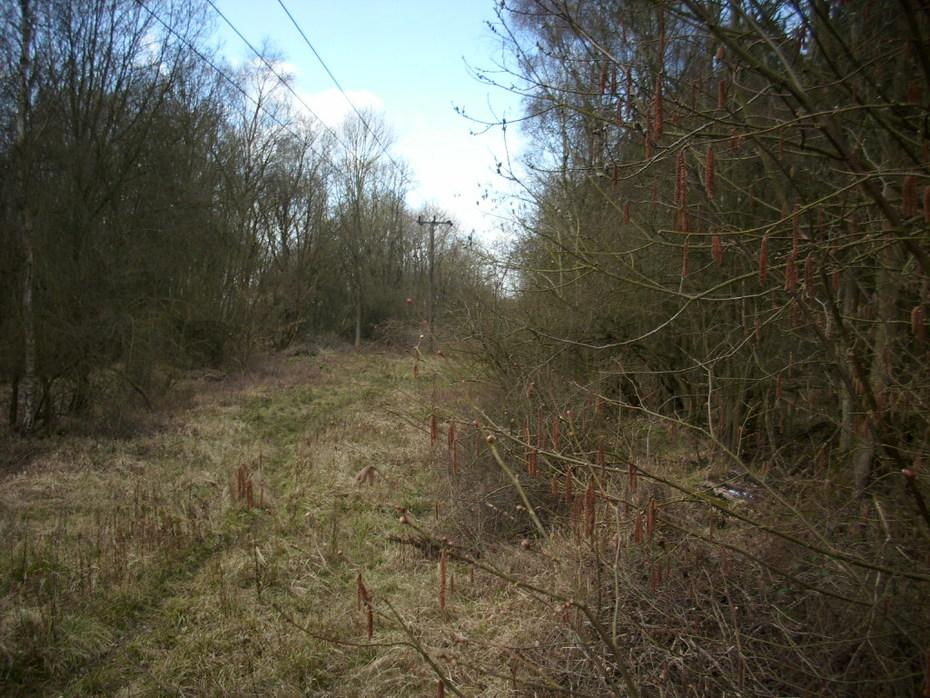 Ravenstone Wood Jc.
