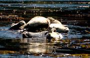 Canoe Cove Lions
