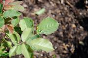 Releasing Ladybugs in a Garden