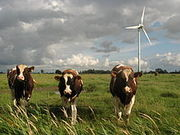 Livestock running away from industrial turbine