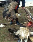 Bird_Kill