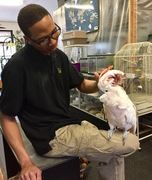 Tiki the Moluccan Cockatoo with Des