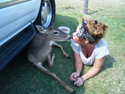 Deer Kissing Rose