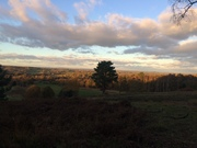 Ashdown Forest - Lintons and Hartfield Circular