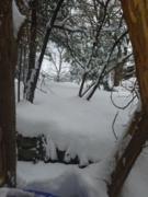 February Winter Weekend in Bloomfield Hills Mi