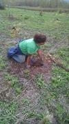 Neversink Tree Planting