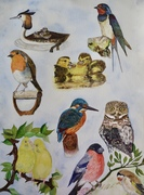 Some of my favourite birds!