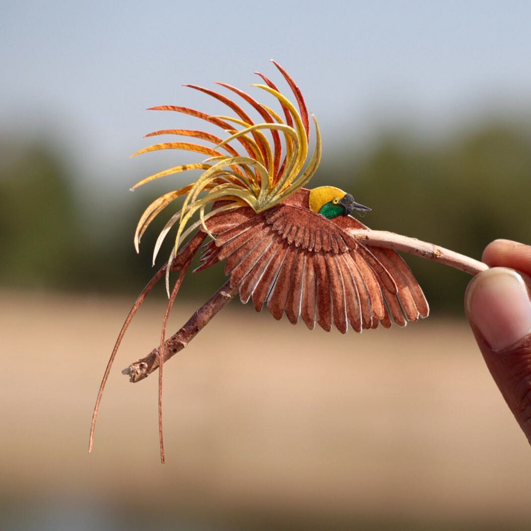 ხელოვნება, შემოქმედება, არტი, მუყაოს ჩიტები, qwellybirds