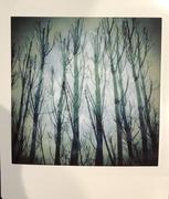 Botanic Ghosts