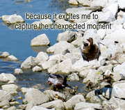 to capture the unexpected moment