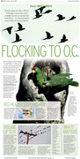 Focus: Wild Parrots
