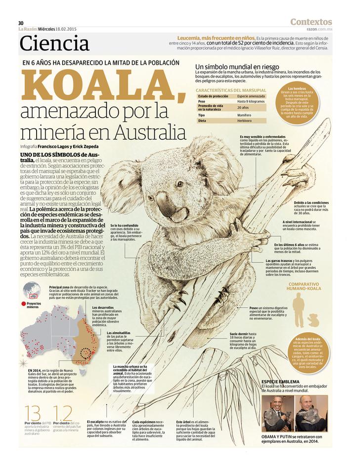 Koala, amenazado por la minería en Australia
