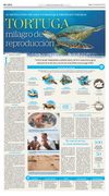Tortuga: milagro de la reproducción