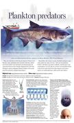 Ginormous carp