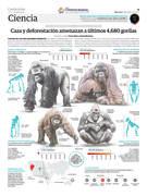 Caza y deforestación amenazan a últimos gorilas