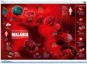 Malaria-Plasmodium