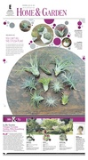 Home & Garden — Air plants
