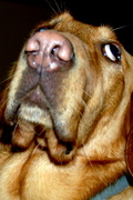 puppy ponders