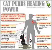 Purr Medicine