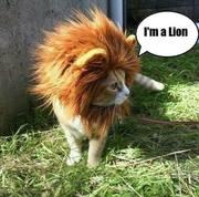 He's a Lion