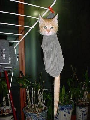 Catapillar Cat