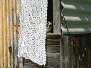 Setumaa-cat behind the curtains