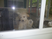 The face I get when I leave the camper :(