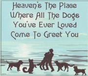 There Are Dogs In Heaven!