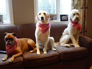 Gracie  and her cousins for her pre christmas sleepover