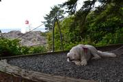 Vacashuns in Ucluelet