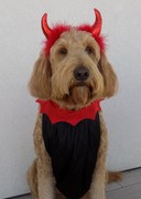 Happy Halloween from the Devilish Diva!