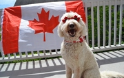 Ready to pawty for Canada's 150th!