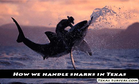 shark-wrangling-in-texas
